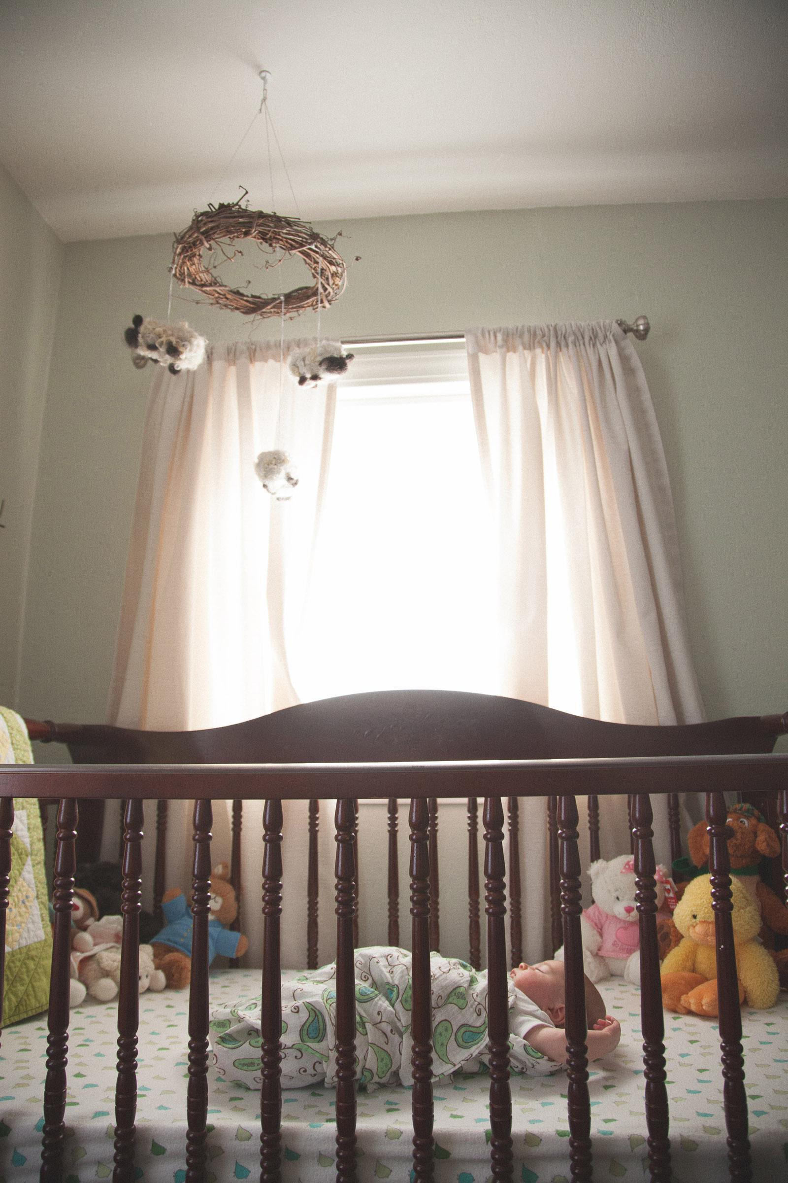 008-nursery-baby-birds-woodland-new-mexico-farmington